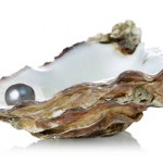 Picture of pearl in oyster shell