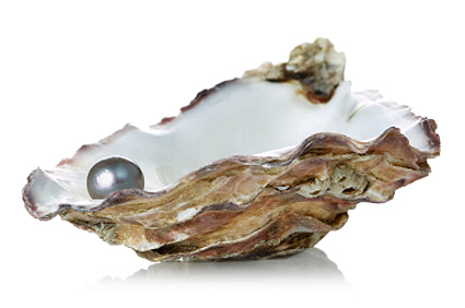 of pearl in oyster shell Open Oyster Shell With Pearl